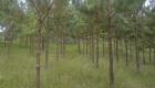 abejorral-julio-2011-003-copia